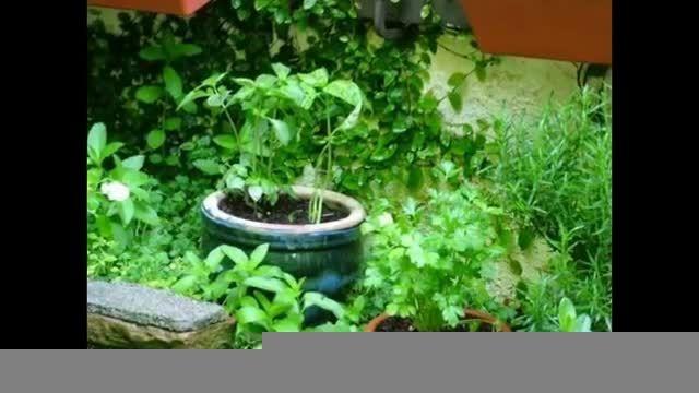باغ های گیاهان دارویی و شفابخش