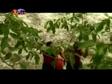 اسمر - جمال محمودی - کلهر