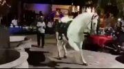 رقص بسیار زیبای اسب(رقص پا)
