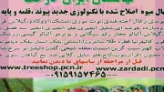 درخت میوه /ارقام نهال میوه جدید/نهالستان ایران درخت