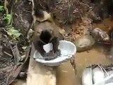شستن ظرف توسط میمون خیلی باحاله اند خندس ببین چه جوری میشوره