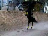 اسب رو ببین چی کارا میکنه