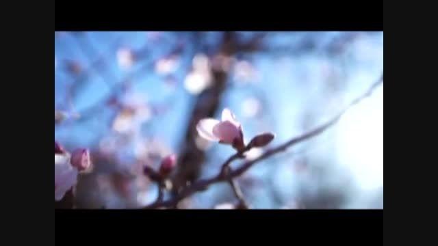 نماهنگ بهار فاطمی با صدای صابر خراسانی