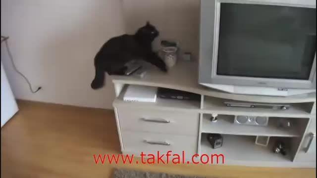 ماموریت غیر ممکن گربه