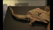 ماموت 39 هزار ساله | درب اتوماتیک کرکره ای | درب پارکینگ