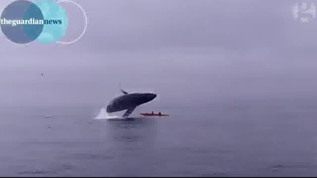فیلم دور برگردان نهنگ غول پیکر در آسمان!