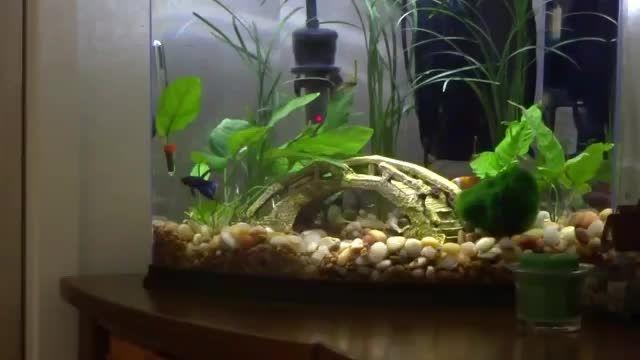 ماهی فایتر خوشحال