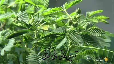 واکنش گیاه قهر کن هنگام لمس کردن