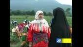شبکه گلستان و سومین جشنواره بزرگ توت فرنگی شفیع آباد