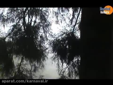 کارناوال | جنگل داو هیل، Kursiang