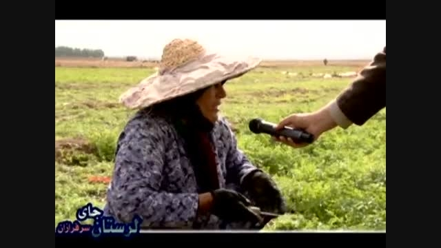 فیلم انتخاباتی سردار جواد درویش وند- کشت زعفران- (26)