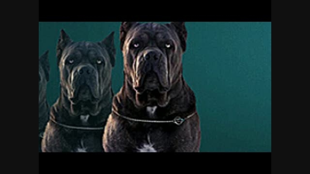 سگ نگهبان و گارد (مرجع نیازمندیهای سگهای نگهبان)