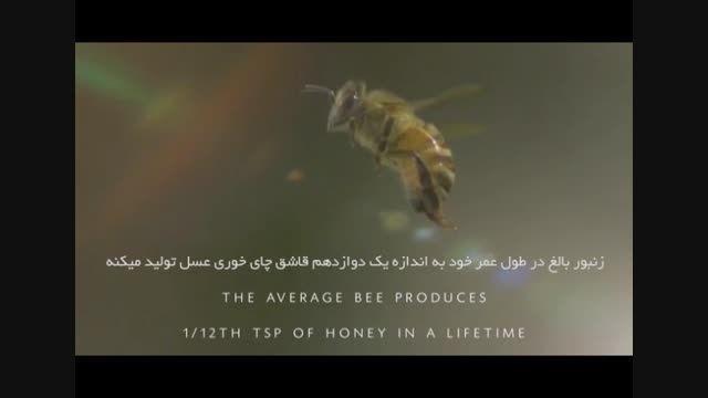 حقایقی در مورد زنبور عسل - عسل آراماس