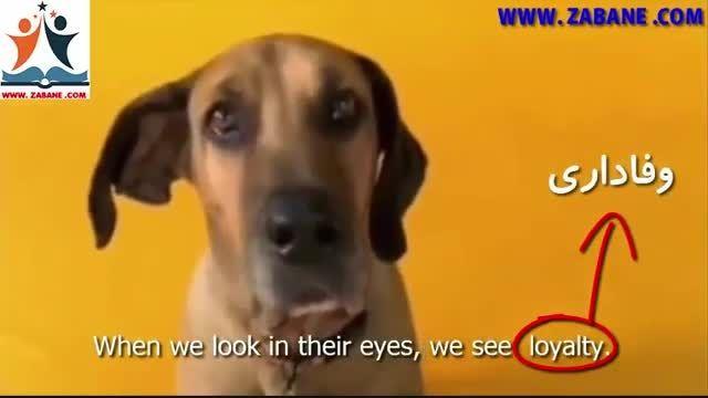 چشم های سگ های دوست داشتنی