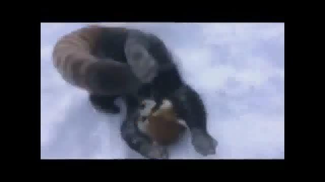 واکنش جالب حیوانات به برف