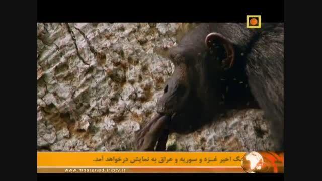 مستند آفریقا با دوبله فارسی - آینده