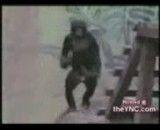 رقص بندری حیوانات.دست دست دست