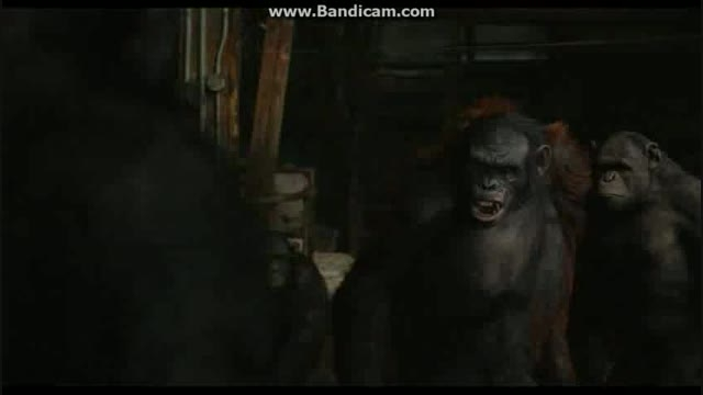 سکانسی از فیلم Dawn Of The Planet Of The Apes