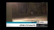 حمله عجیب و دیدنی هزاران جیرجیرك ها به خوزستان