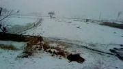 برف زمستانی چمگردان