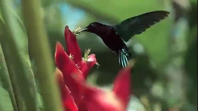 تصاویر زیبایی از طبیعت
