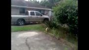 عاقبت سر به سر گذاشتن  گربه توسط کلاغ