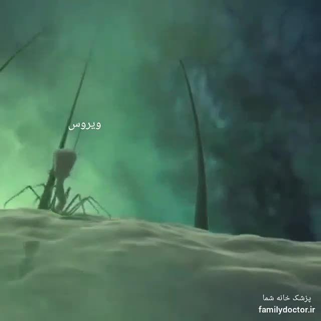 حمله ویروس به سلول ها