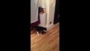 یعنی چی به سر این گربه اومد؟؟؟؟؟؟؟؟؟؟!!!!!!!!!!