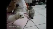 دعوای سگ و گربه.... خیلی خنده دار:)