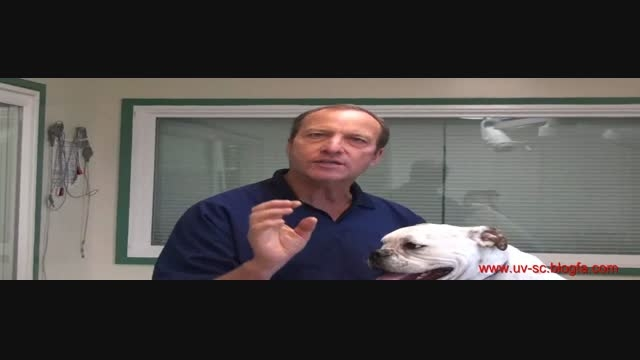 آشنایی و روش تخلیه کیسه های مقعدی سگ-Anal Glands of dog