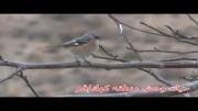 حیات وحش منطقه كهك استان قم