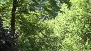 طبیعت گیلان