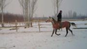 اسب سوارکار حرفه ای