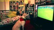 سگ فوتبالی وبازیگوش