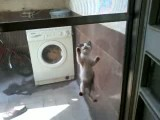 بامزه ترین گربه دنیا