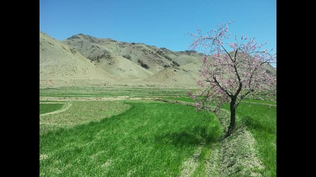 طبیعت بهاری روستای مسک