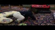 محمد صالح کوچولوی بانمک