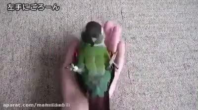 طوطی خیلی باهوش