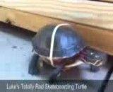 سریعترین لاکپشت جهان