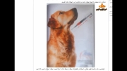 سگ و گربه همدم جدید برخی ایرانی ها/ آرایش سگ فقط 50 هزار