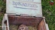 کشف جمجمه گرگ نما (flowrew) در بلغارستان