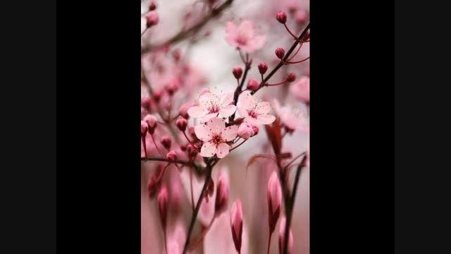 موسیقی بی کلام شاد و آرامش بخش Dance of Spring