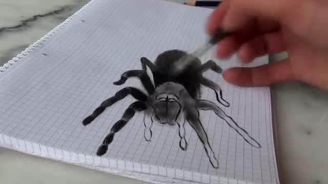 کشیدن نقاشی سه بعدی عنکبوت