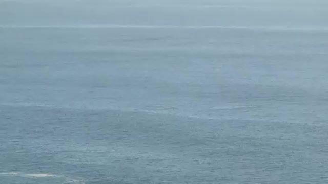 پرش زیبای نهنگ در اقیانوس