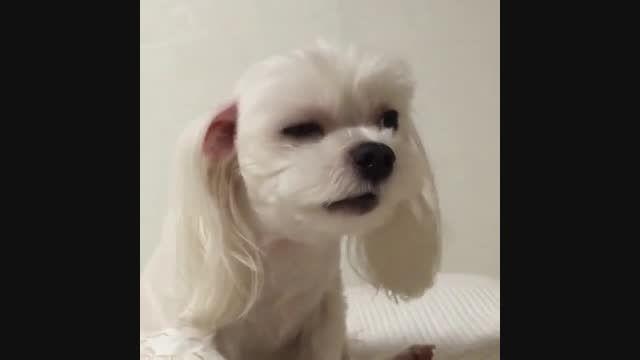 هاپو بامزه - تقدیم به تریش و عاشقان سگ