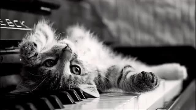 موسیقی بی کلام غمگین-پیانو