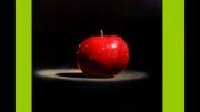 سیب تو سرخ/نهال سیب تو سرخ/درخت سیب تو سرخ/tree  apple