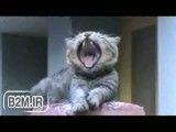 یه میکس باحال صدا روی گربه ها