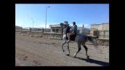 اسب کرد-پرچم(مشکین شهر)