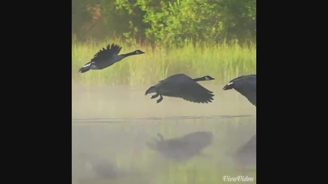 ❤ عشق پرنده ای ست آزاد و رها . . . ❤